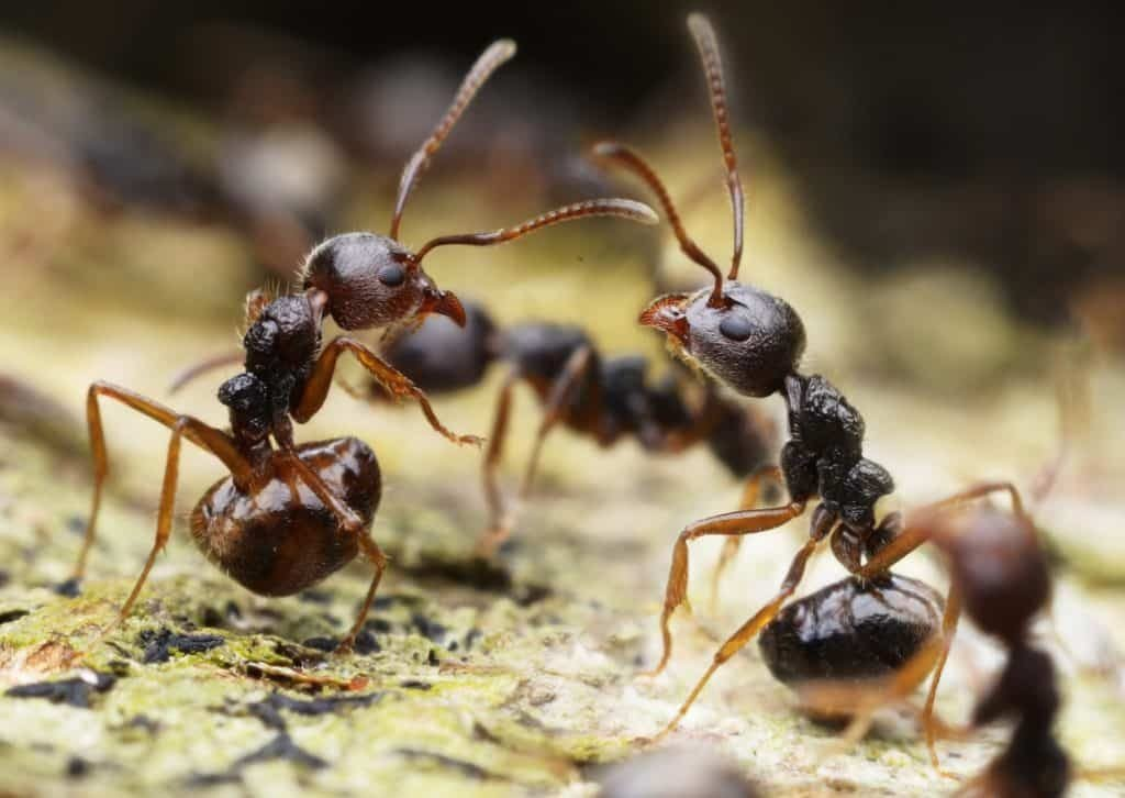 Ants 4 - Southern Pest Management pest control services in North Georgia