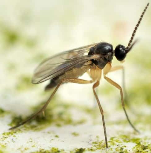 Fly & Gnat Pest Control Services