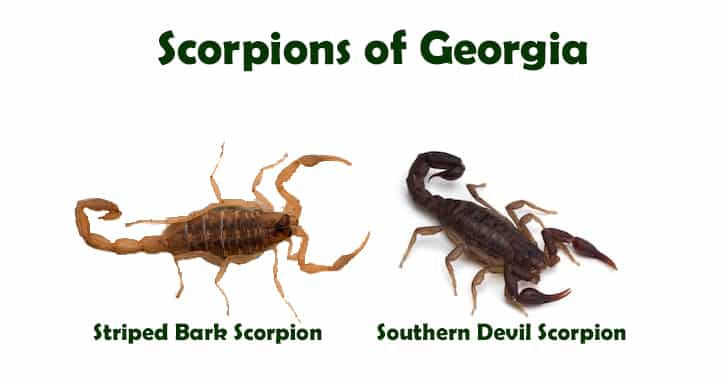 Scorpion Pest Control Services