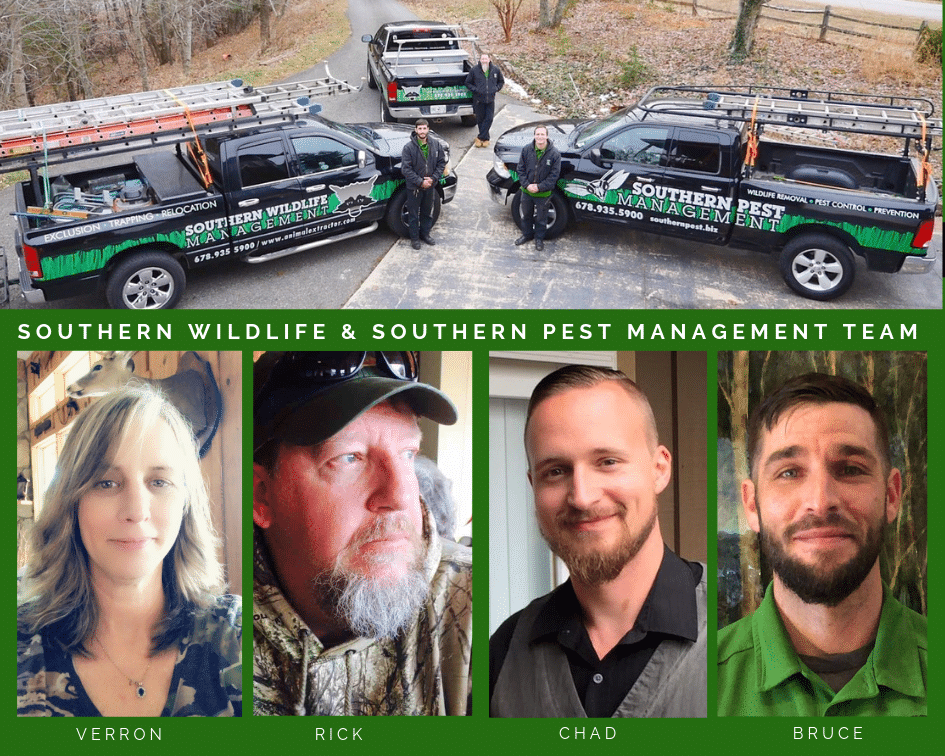 southern pest management team