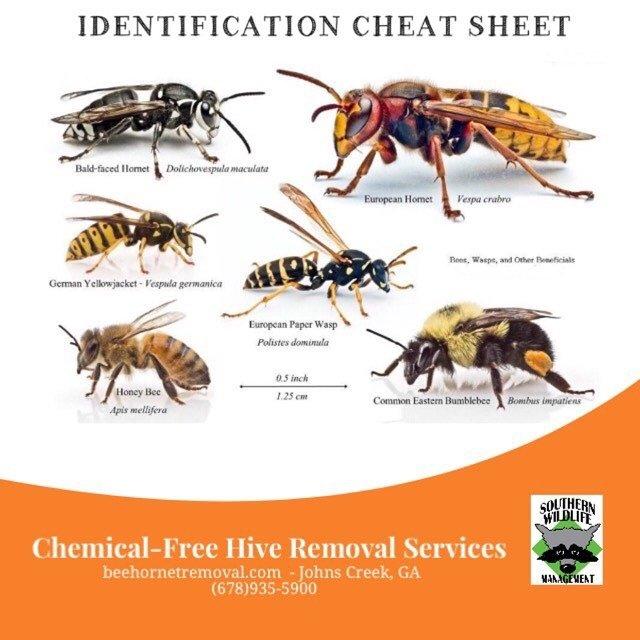 Wasp & Hornet Pest Control Services